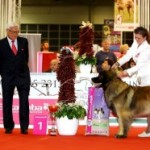 The World Dog Show in Budapest